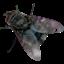 Shoo, fly